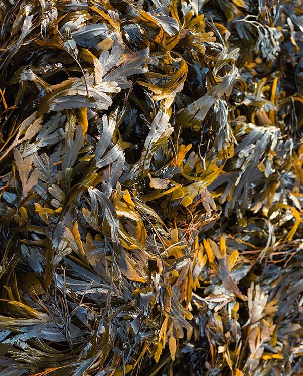 ireland-seaweed