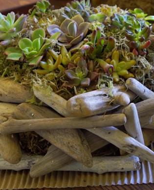 plants-2